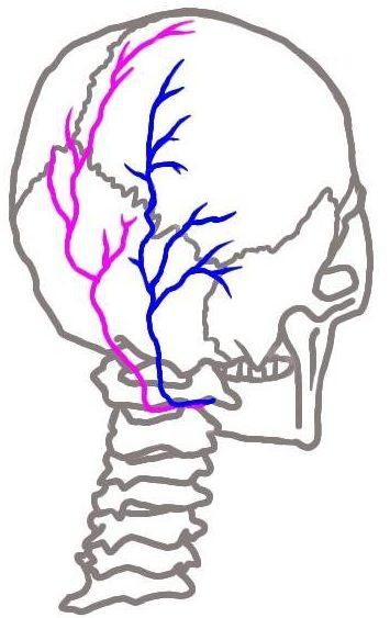 大後頭神経・小後頭神経